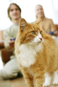 Wymioty u kota – czy to powód do zmartwień?