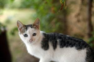 Jak oduczyć kota gryzienia? Porady i wskazówki