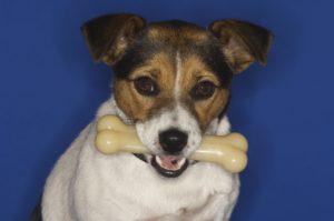 Kość dla psa – czy pies może jeść kości?