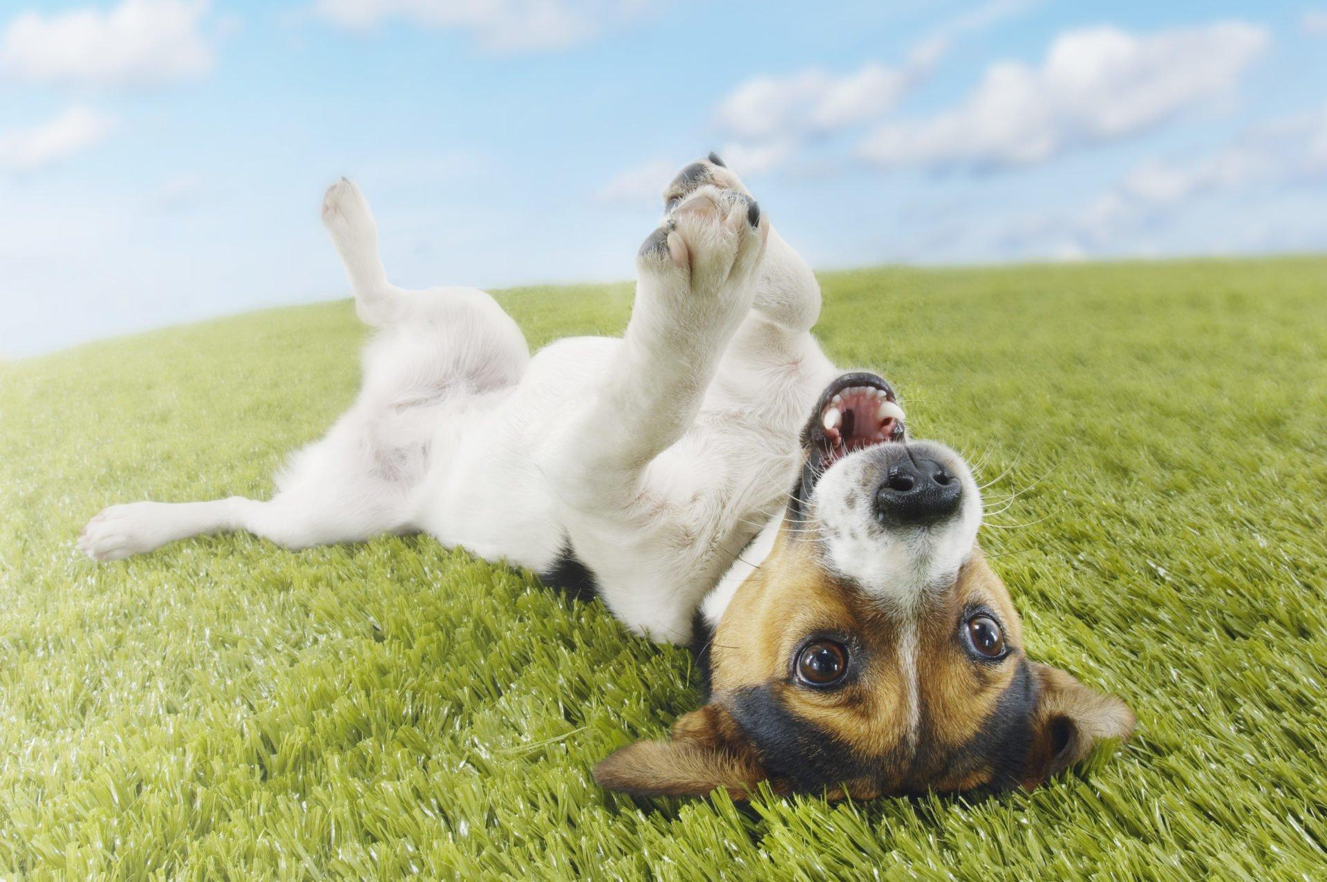 Miód dla psa – czy pies może jeść miód?