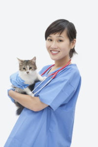 Umaszczenie kota – od czego jest zależne?