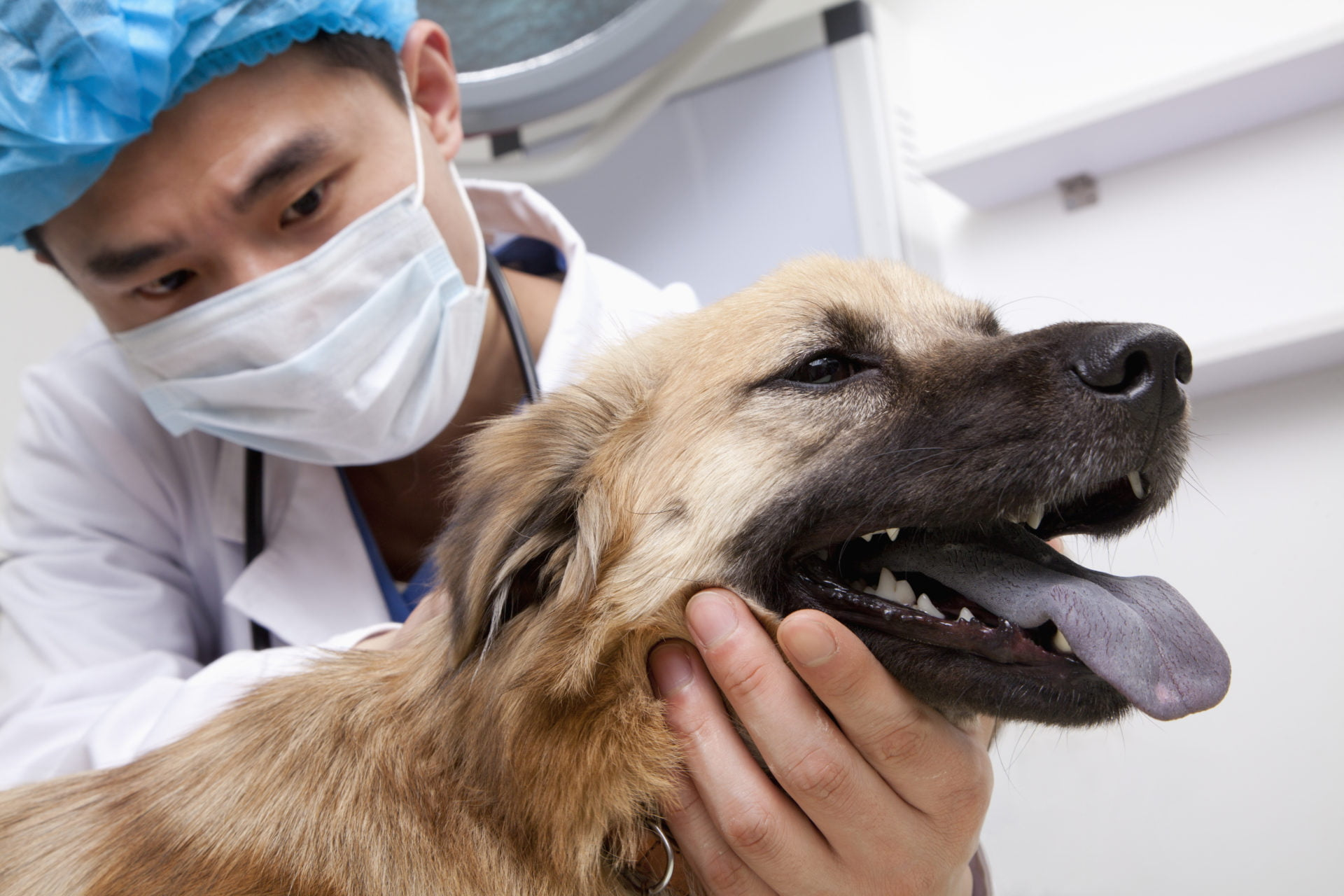 Jak chora trzustka u psa wpływa na jego zachowanie?