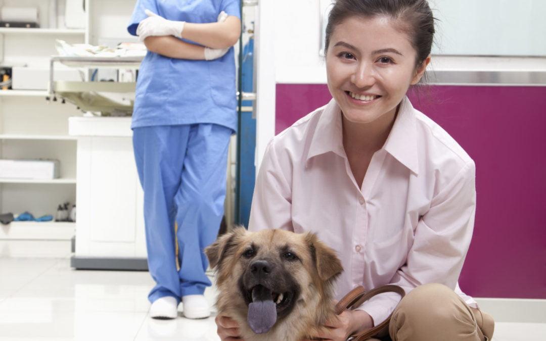 Kastracja psa – wady i zalety, przyczyny i porady