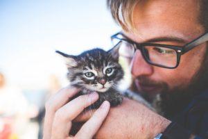 Nawiązanie więzi z kotem - jak to zrobić? Oto 6 najważniejszych porad!