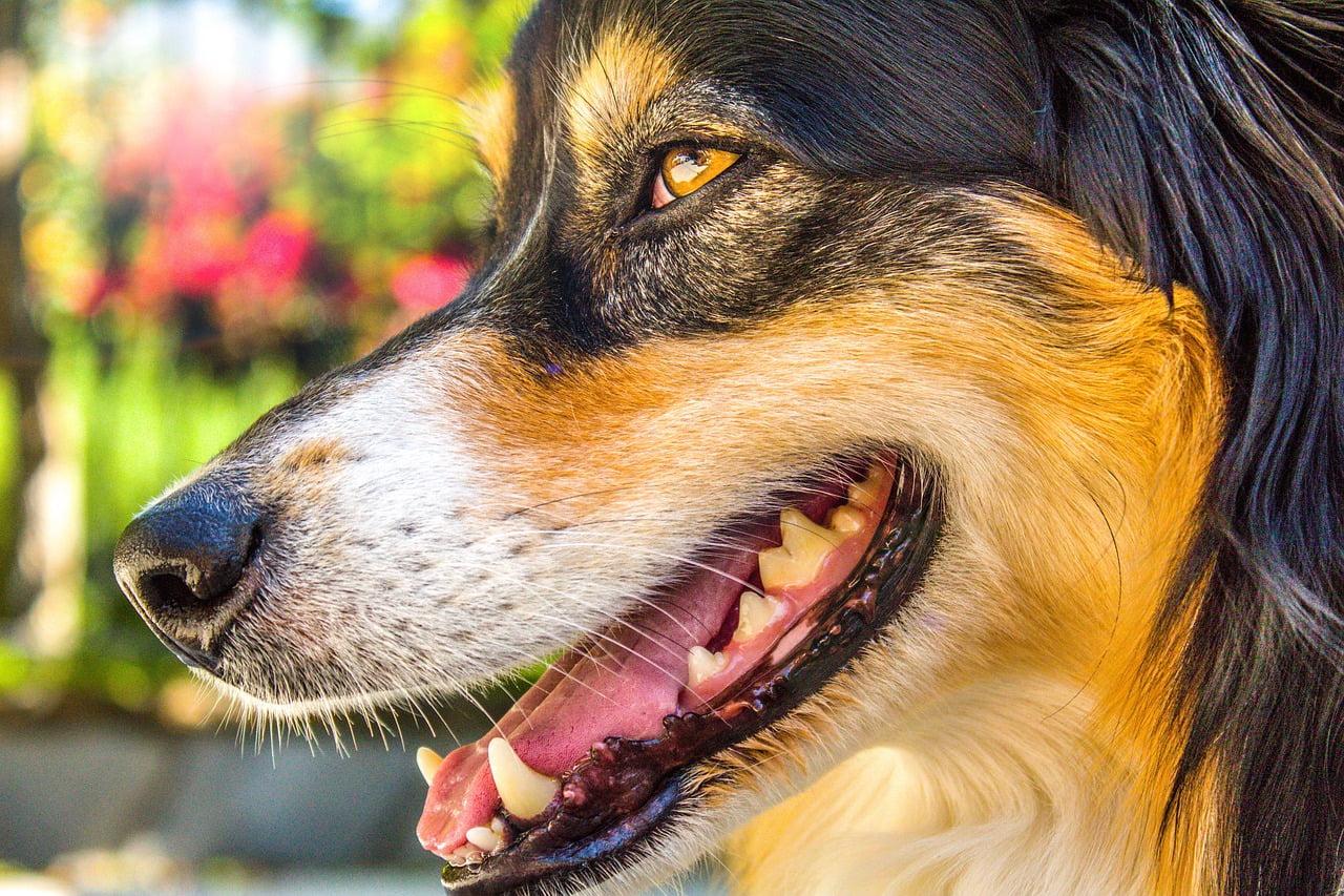 4 ciekawostki o psich zębach.