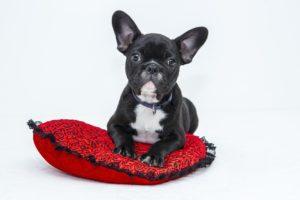4 powody, dla których psy przynoszą nam zabawki