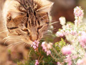 5 zapachów które odstraszają koty