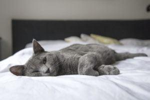Kot nie chce spać razem z Tobą - 4 powody dlaczego!