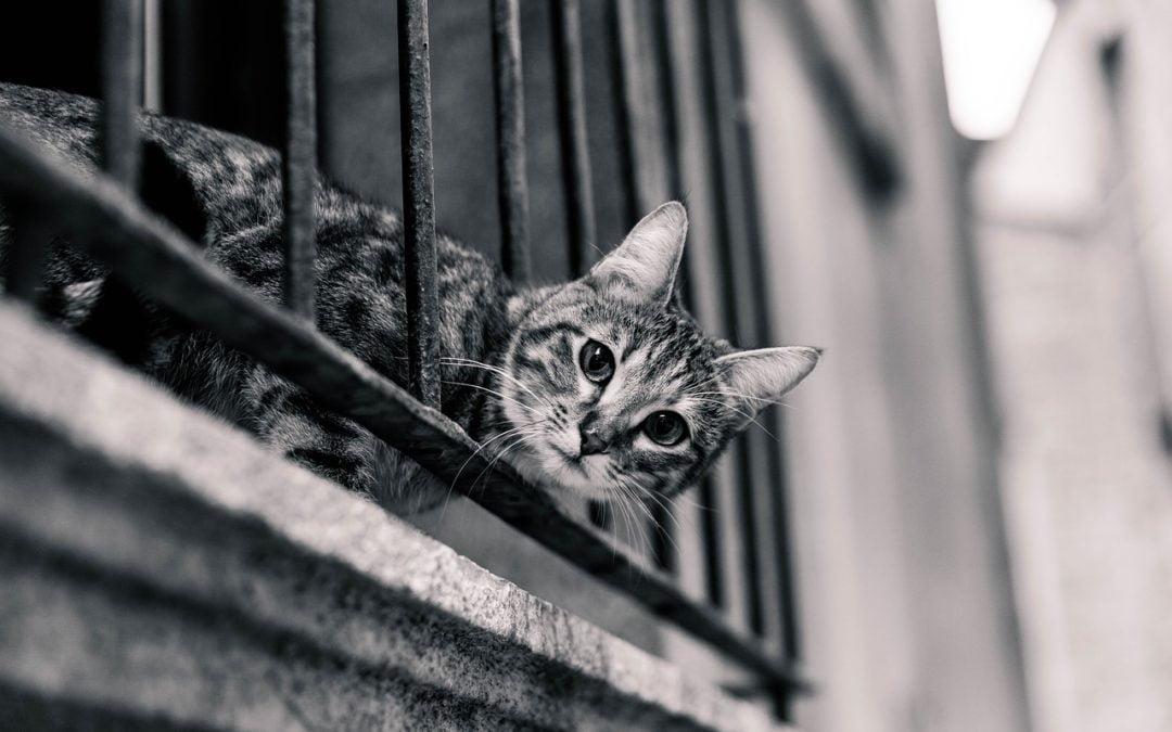 Jak urządzić balkon dla kota? Oto 4 porady!