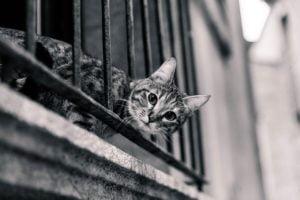balkon i kot