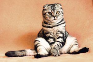 14 ciekawostek o kotach