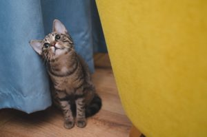 8 powodów dla których warto mieć kota!