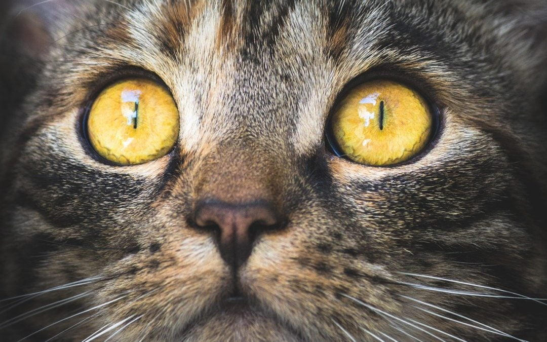 Kocie oczy – jak rozumieć spojrzenie kota?
