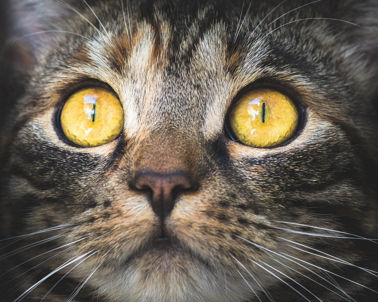 Kocie oczy - jak rozumieć spojrzenie kota?