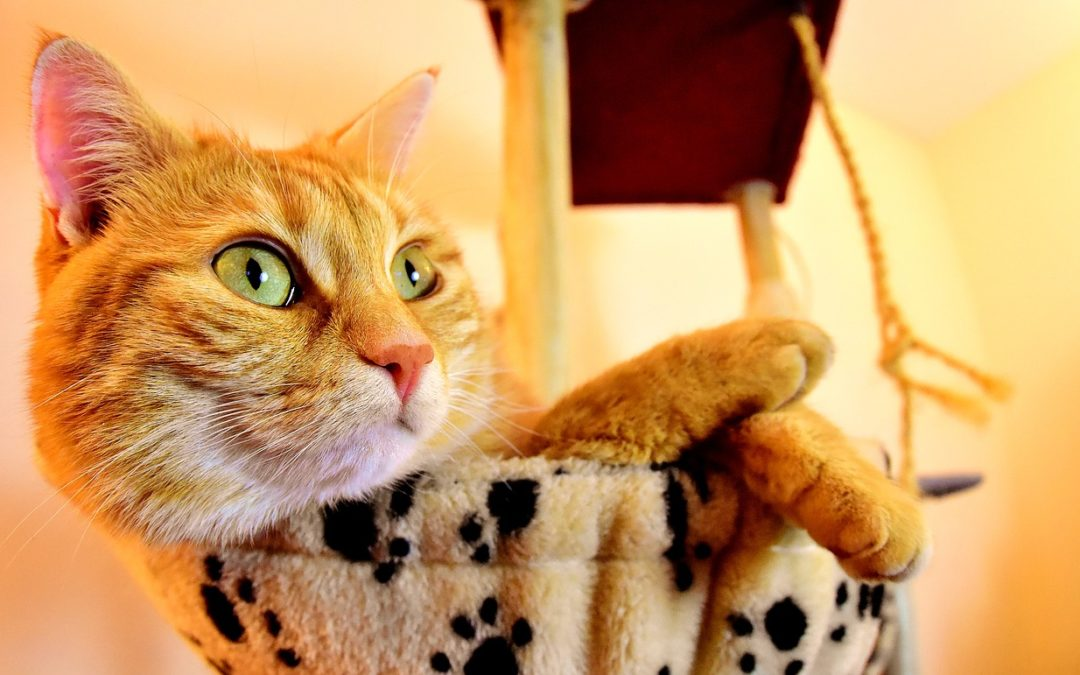 Urozmaicenie życia kota – oto 5 pomysłów!