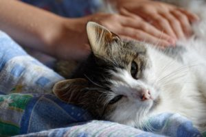 Mruczenie kotów, czyli trochę o komunikacji