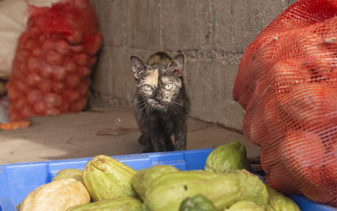 5 rodzajów warzyw które warzywa są trujące dla kota