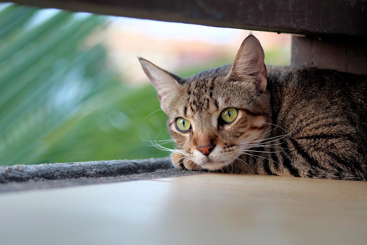 5 oznak stresu u kota!