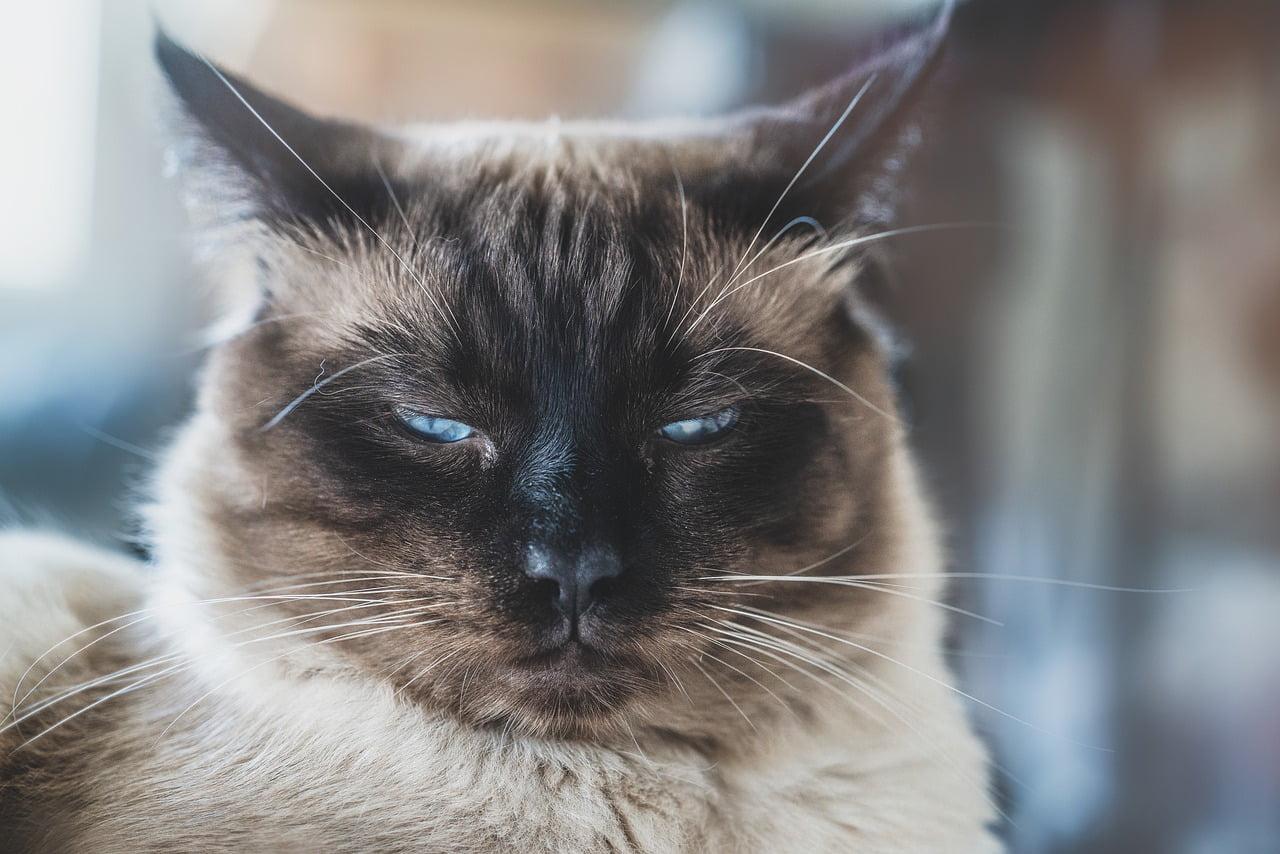 Jak postępować z zazdrosnym kotem?