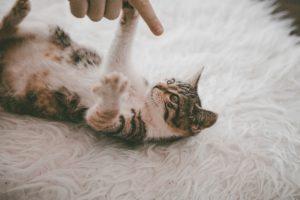 Kot wyrywa sobie sierść – jak sobie z tym poradzić?