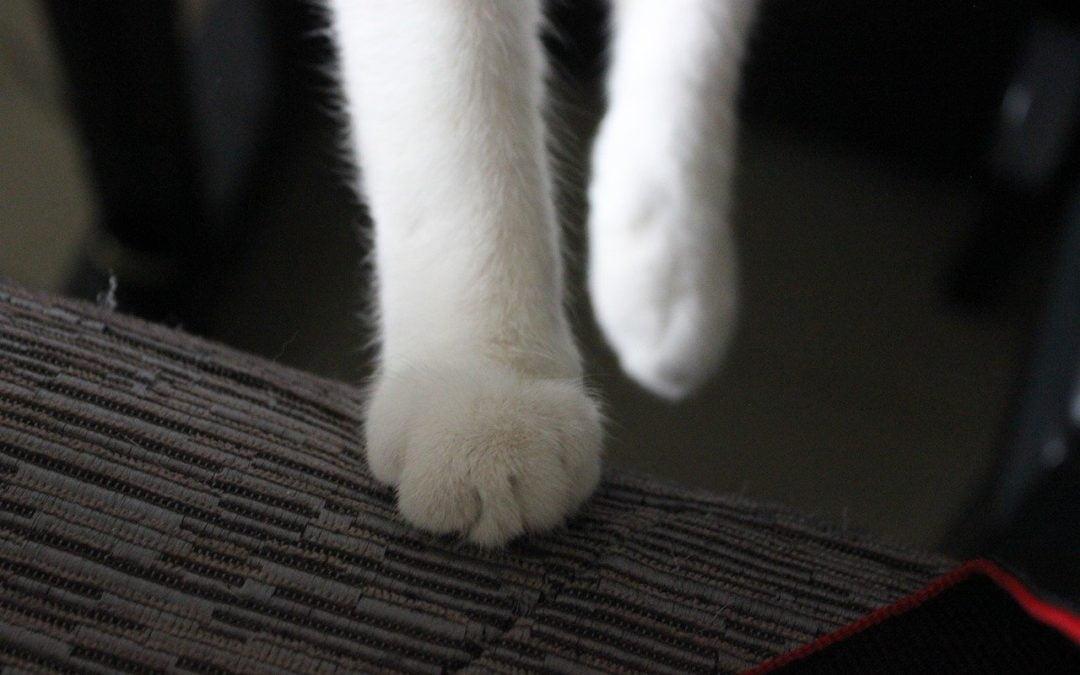 Zimne kocie łapki – 5 powodów!