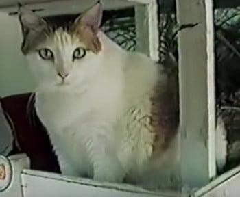 5 kotów sławnych na cały świat!