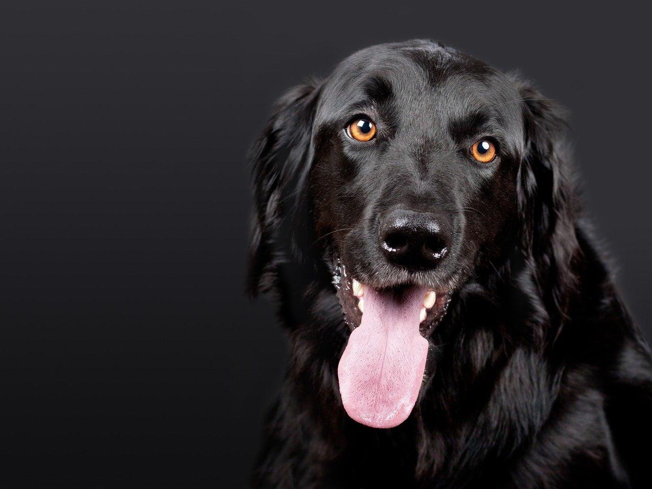 5 powodów dlaczego psy nas liżą