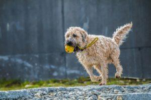 4 rzeczy których potrzebuje pies po adopcji