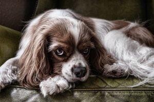 4 pozycje w jakich śpi Twój pies