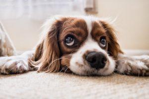 5 sposobów na ukazanie uczuć przez psy