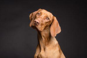 3 popełniane błędy przez właścicieli psów