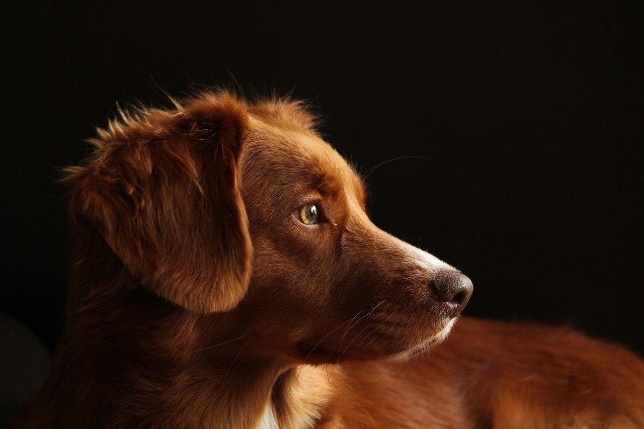 4 rodzaje grzybów, których nie powinien jeść pies