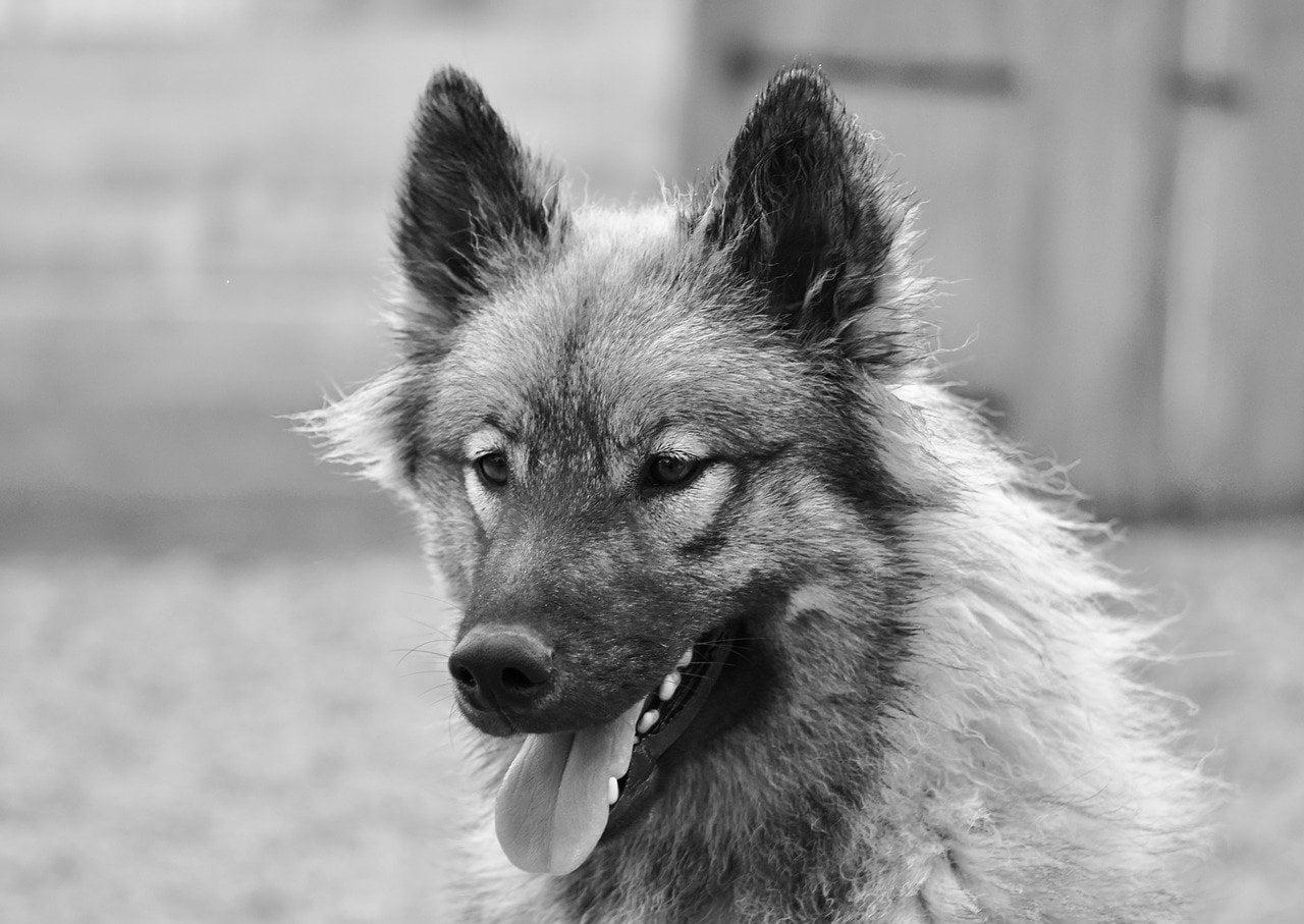 Co zrobić, kiedy pies Cię ugryzie?