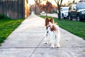 3 wskazówki, żeby pies Cię słuchał