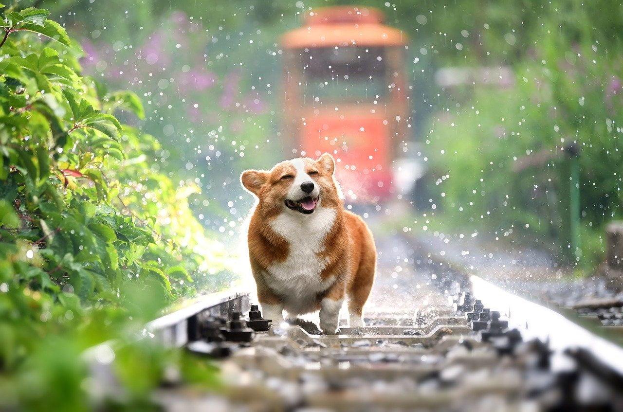 5 mitów o zachowaniu psa