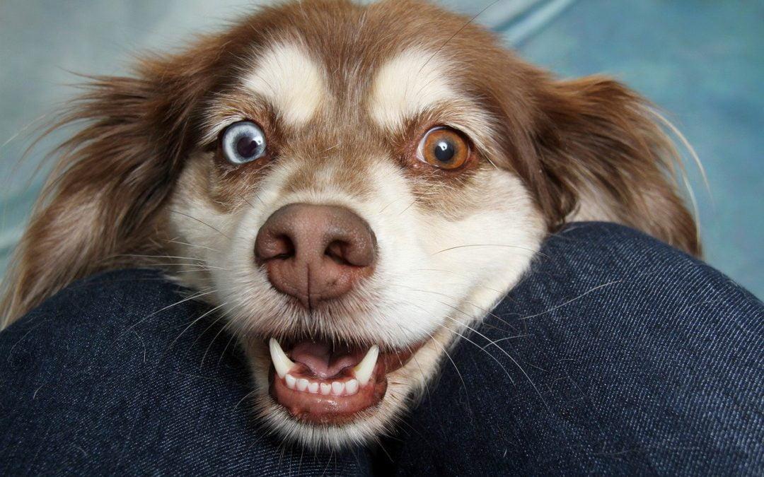 Najbardziej i najmniej szczekliwe rasy psów