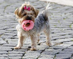3 powody dziwnych zachowań psów