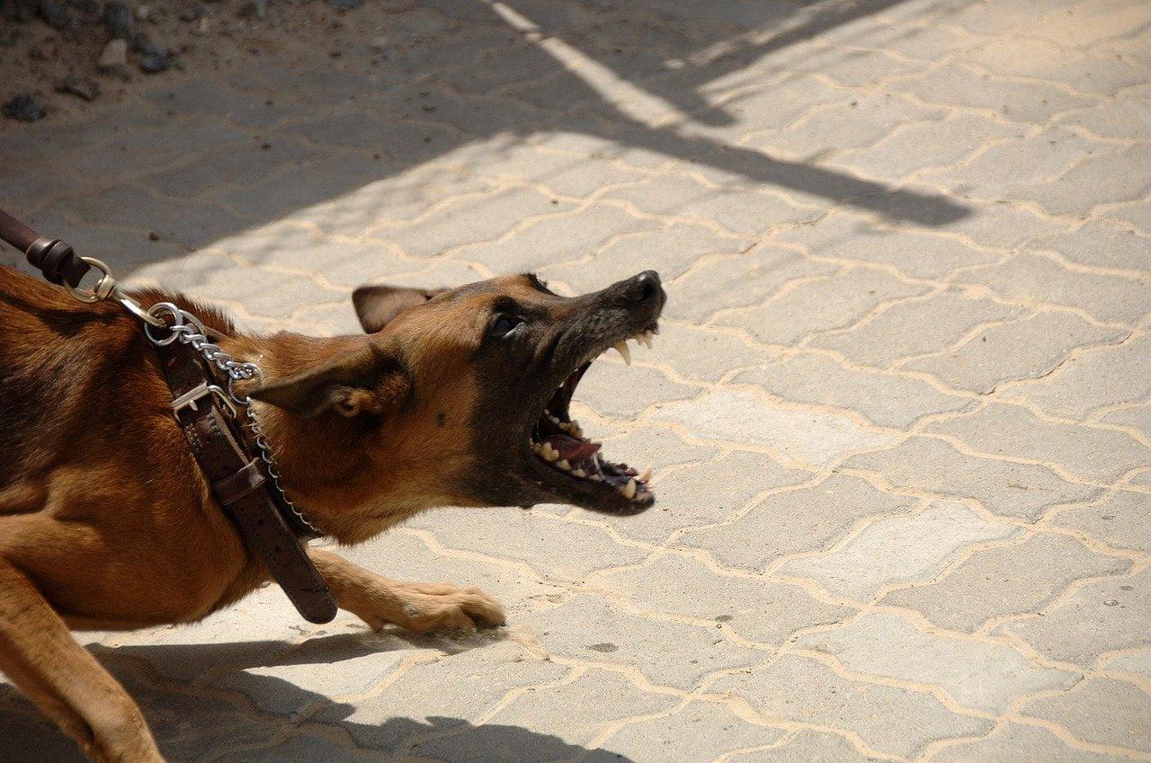 4 mityczne powody agresji psów