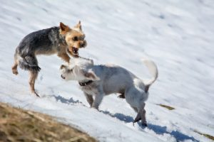 Nagła agresja psa? Musisz zobaczyć te porady!