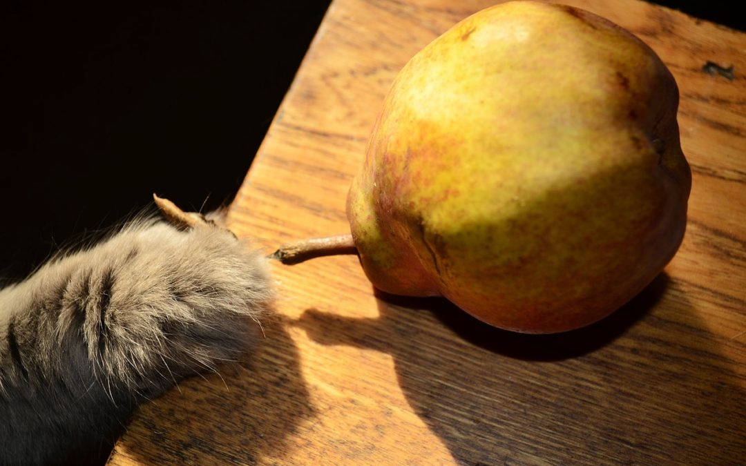 Owoce które szkodzą kotu – 4 rodzaje!