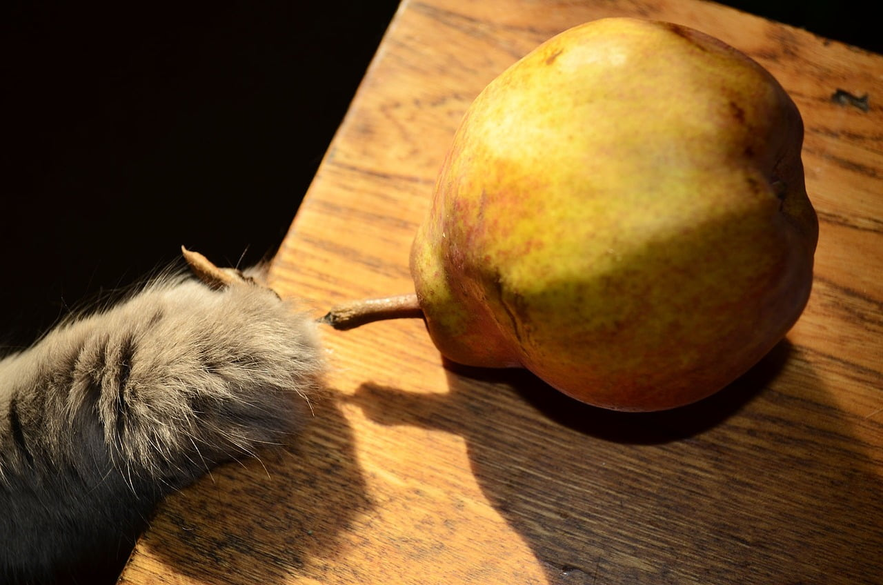 Owoce które szkodzą kotu - 4 rodzaje!