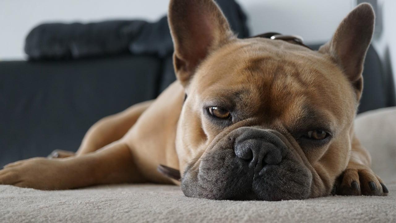 3 sposoby na psy, które nie lubią zostawać same