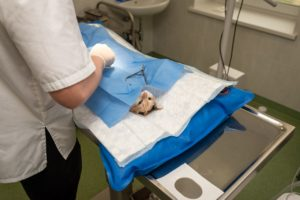 Kot nie może oswoić się z wizytami u weterynarza? Oto 4 skuteczne porady na zniwelowanie stresu!