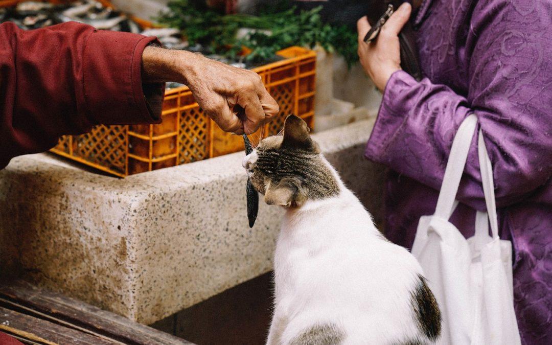 Kot i ryby – czyli co dobrego można zjeść