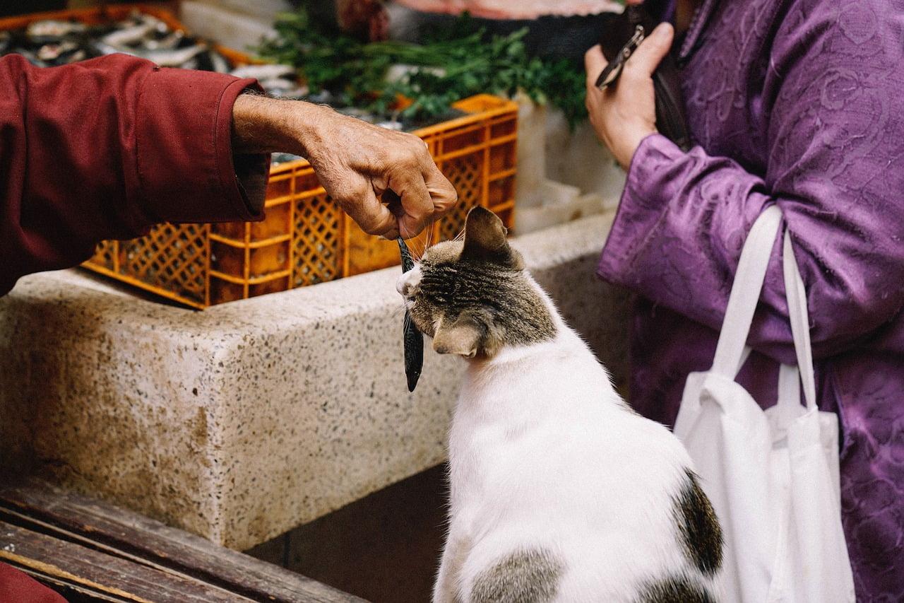 Kot i ryby - czyli co dobrego można zjeść
