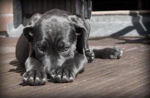 3 sposoby na strachliwe psy