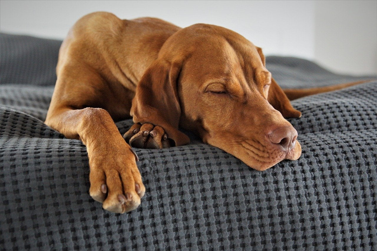 4 sposoby jak odzwyczaić psa od spania na łóżku