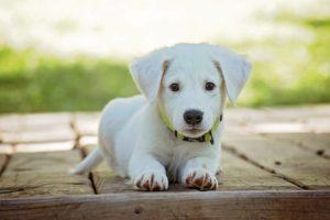 3 sposoby na oduczenie psa żebrania