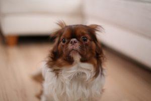 3 sposoby na uspokojenie psa podczas burzy