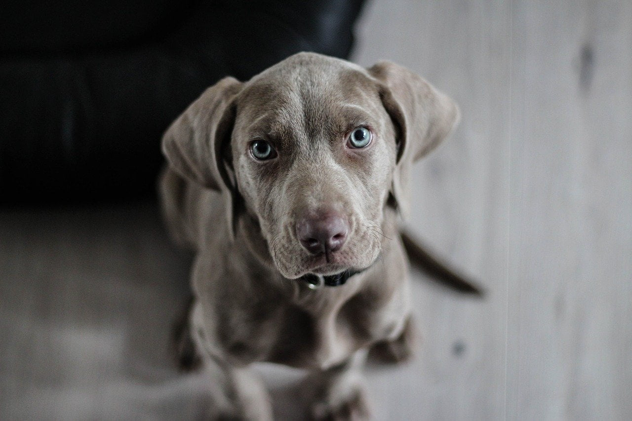 5 najsławniejszych psów w historii!